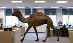 HumpDay13